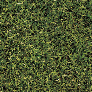 Grass Image tile